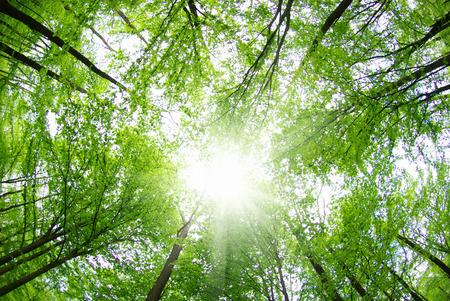 Paysage magnifique forêt le matin Banque d'images - 42267773