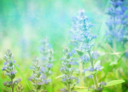 defocus: Beautiful defocus blur retro background with flowers