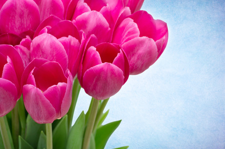 flores: Bouquet from tulips flowers isolated on retro background Stock Photo