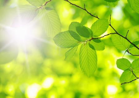 緑の背景の上の緑の葉 写真素材