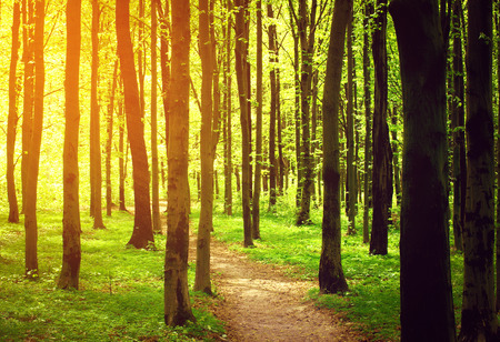 uplifting: forest path in the morning Stock Photo