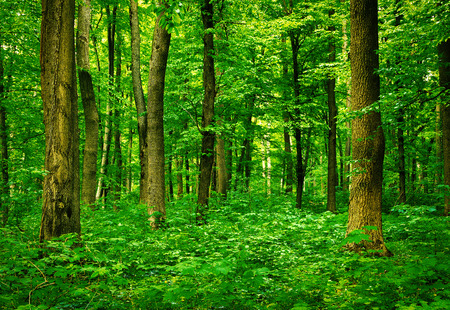 glades: forest landscape in the morning