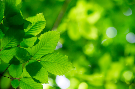 green background: green leaves over green background Stock Photo