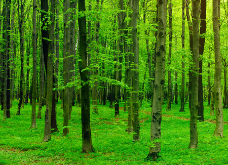 glades: beautiful forest landscape in the morning