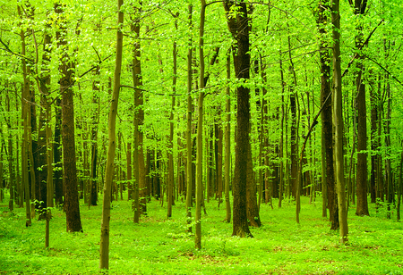 magnificence: beautiful forest landscape in the morning