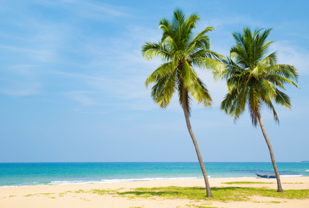 Coconut tree on the sky background 写真素材