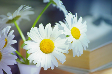 Chamomile flowers on books