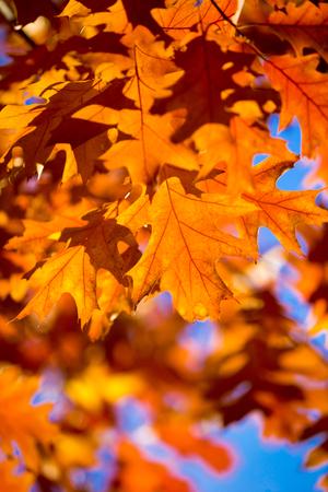 Herbst Ahornblätter auf Hintergrund Standard-Bild - 94131469