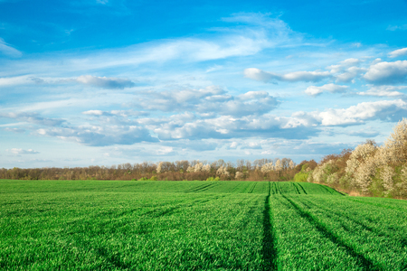 Green field and blue sky Stockfoto - 116149984