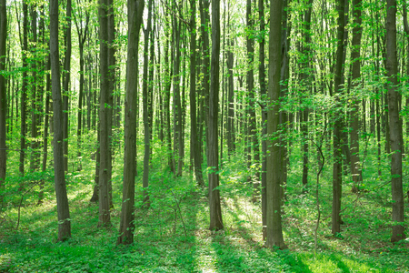 Forest trees. nature green wood sunlight backgrounds Banco de Imagens