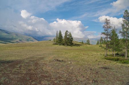 Beautiful evening summer landscape of Altai. Nature and travel. Russia, Siberia