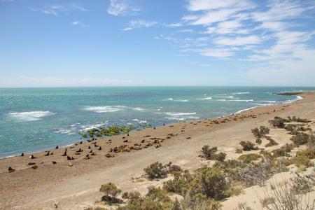 Valdes Peninsula. Coastline of Atlantic Ocean. Colony of marine mammals (sea lions, elephant seals and fur seals).