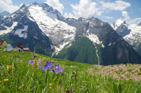 Dombay. Lilac-blue campanula. Bright wild flowers on the snowcapped mountains. View from the Mussa-Achitara mountain. Nature and travel. Russia, North Caucasus, Karachay-Cherkessia