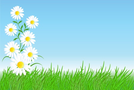 Camomiles with green grass and blue sky Stock Vector - 9380444