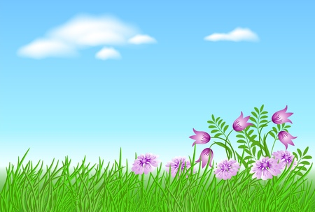 field of daisies: Meadow flowers with green grass and blue sky with clouds