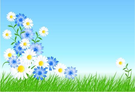 Bleuets, camomiles avec de l'herbe verte et ciel bleu