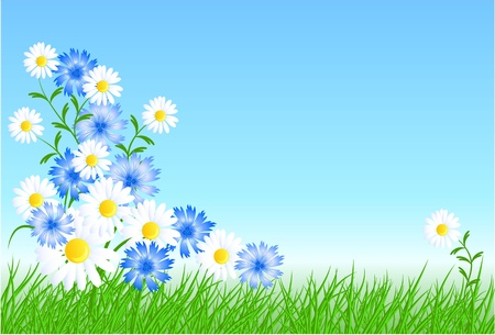 Cornflowers, camomiles with green grass and blue sky Vector