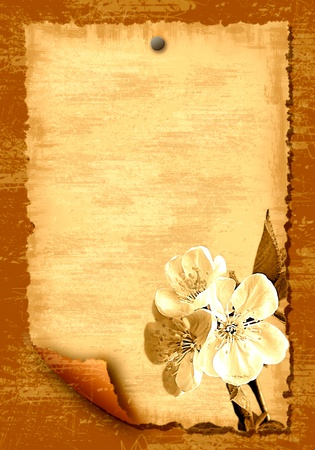 wood textures: Old paper blank leaf with flowers