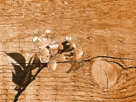 Wooden texture with flowers  photo
