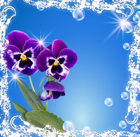White frame with pansy, bubbles and stars photo
