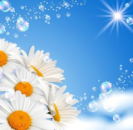 Marguerites et bulles contre le ciel
