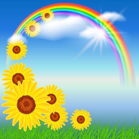 Sunflowers, grass  and rainbow Vector