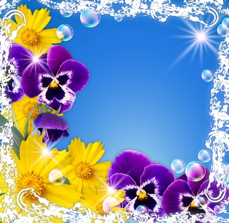 White frame with pansy, camomiles; bubbles and stars photo