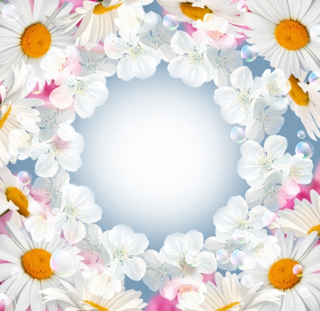 Card with daisy, white flowers and bubbles Stock Photo - 10056992