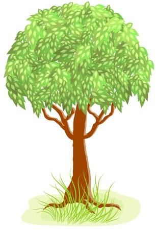 plats: Green tree and grass Illustration
