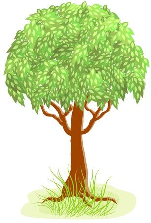 plats: Green tree and grass Illustration