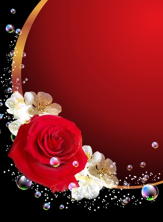 Rose and bubbles photo