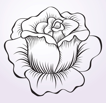 picture rose  Vector