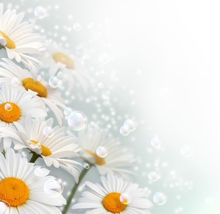 daisy flower: Card with daisy, bubbles and stars