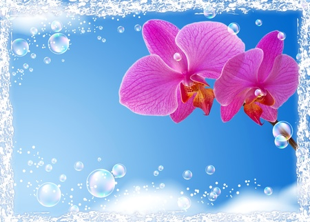 Orchid and bubbles against the sky   photo