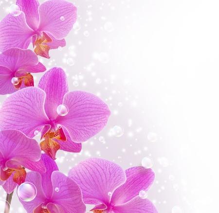 Karte mit Orchideen und Blasen Standard-Bild