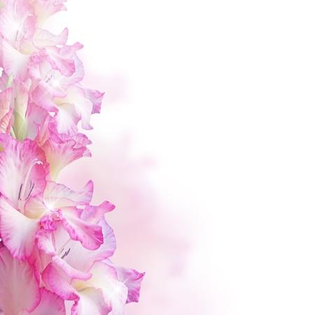gladiolus: Gladiolus and bubbles