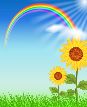 Zonnebloemen, gras en regenboog