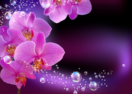 Orchid and bubbles   photo