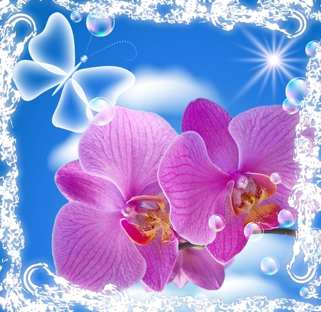 Orchid and transparent butterfly in a white open-work frame photo