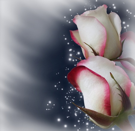 rosas blancas: Tarjeta de rosas y estrellas