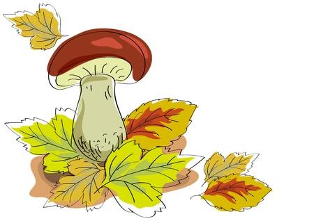 edible mushroom: Mushroom and autumn leaves on a white background. Illustration