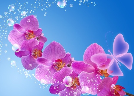 Orchid, bubbles and butterfly   photo