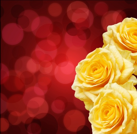 Yellow roses and red boke   免版税图像