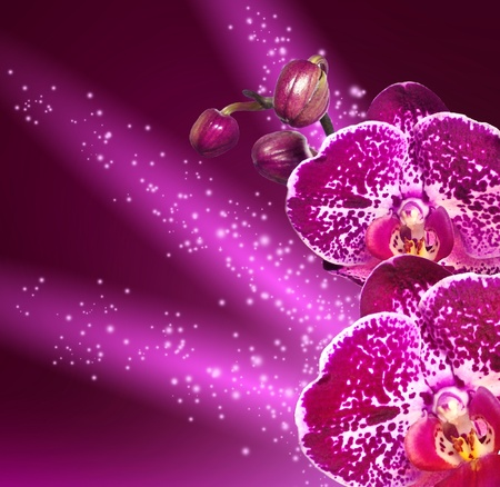 Orchid, rays and stars photo
