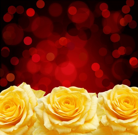 Yellow roses and red boke   photo