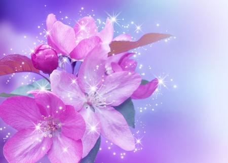 flor de durazno: Cerezos en flor y las estrellas brillan Foto de archivo