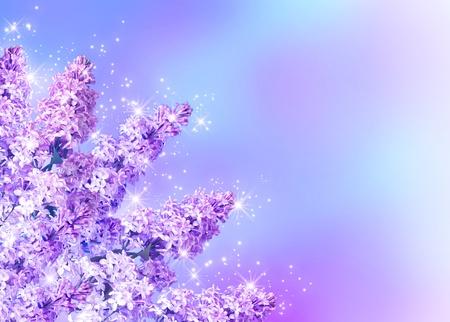 lilac: Lilac blossom and shine stars