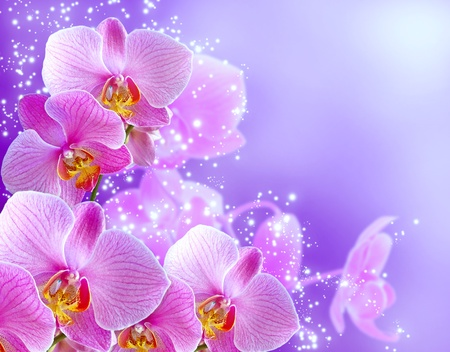 Orchid and stars on blue background