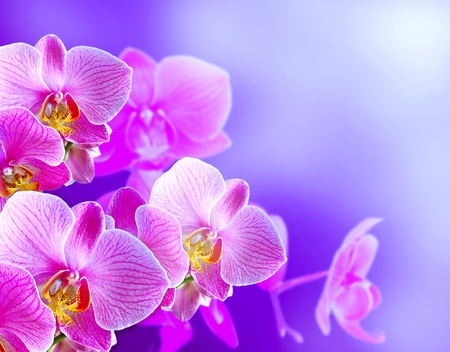 phal: Orchids on  background with smoke