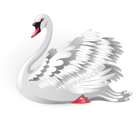 cisnes: Elegante cisne blanco Vectores